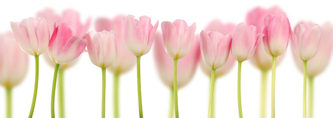 Rosa Tulpen Collage – Frühlingsblumen